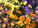 Terreau Floriculture Proveen